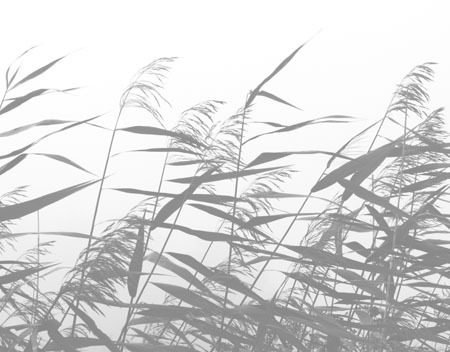 Windy weed white af Kirsten Stigsgaard